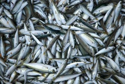 Chinese fisheries